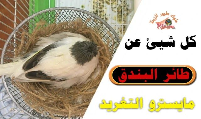 Pin By ملوك طيور الزينة On Birds Blog Birds Blog Posts