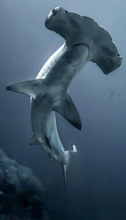 Un tiburon en medio del mar