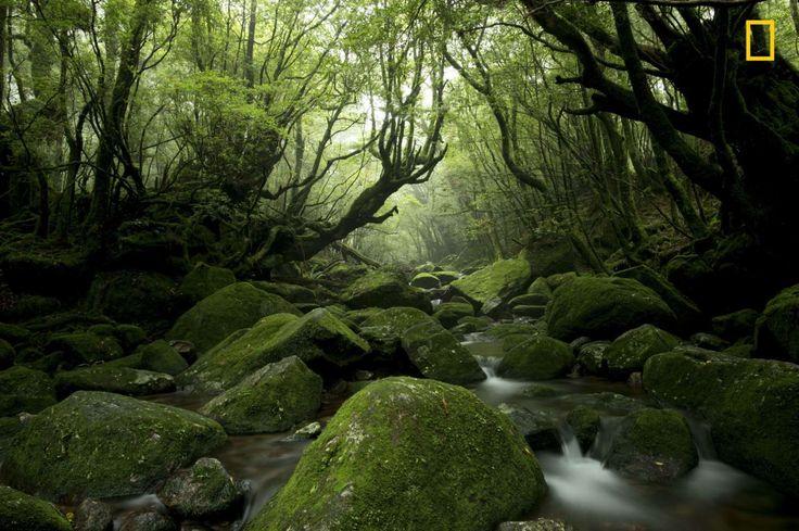 """Yakushima is an island full of abundant moss and beautiful water."" –Tetsuya Hosokawa - Tetsuya Hosokawa / National Geographic Travel Photographer of the Year Contest"
