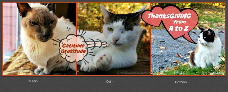 Mancat Monday Cats ThanksGIVING From A to Z