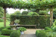Garden #pergola