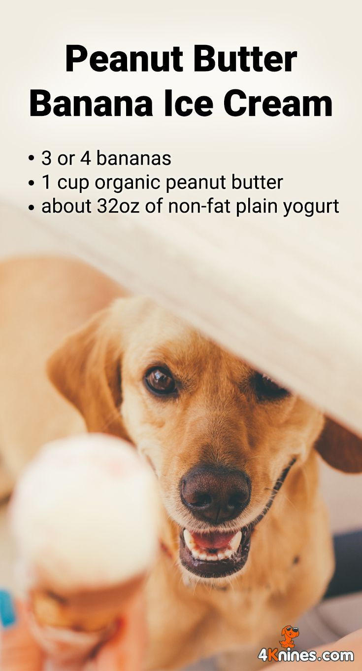 Here S A Nice Cold Treat Your Dog Will Love Just Put Bananas Peanut Butter And Yogurt I Banana Peanut Butter Ice Cream Organic Peanut Butter Dog Health Tips