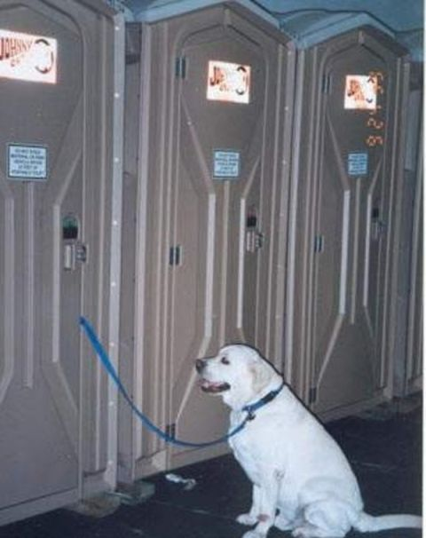 Mommy is busy is a picture of a dog on a leash while the owner is using a portable toilet