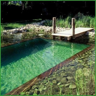 diy natural swimming pool - the plant zones on the side of the main swimming area filters the water, no need for chlorine, salt, or bromine, and the critters and aquatic plants can enjoy the water too!