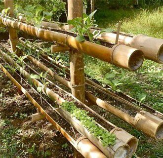 54 best bamboo idea images on Pinterest Landscaping Gardening