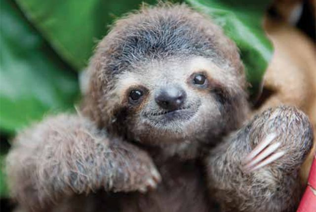 RIP Monster, the Beloved Sloth Who Inspired a Scientist | Mental Floss
