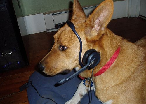 Una perrita llama por teléfono a la Policía en un incendio