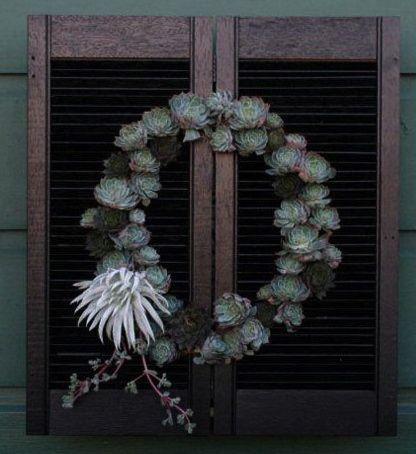 lila b designs wreath
