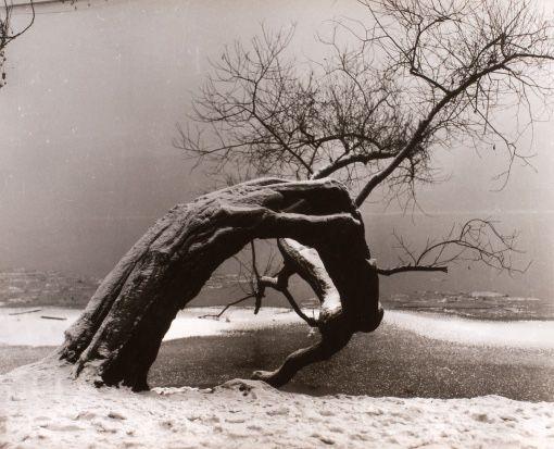 petitpoulailler:oysteros: 1934 Jan Lauschmann (Czech chemist, photographer) ~ Bez názvu
