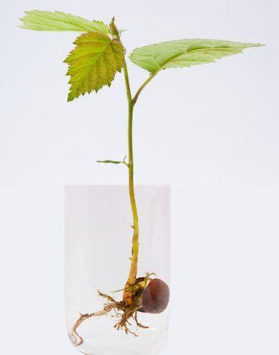 cultivando-plantas-en-agua-02