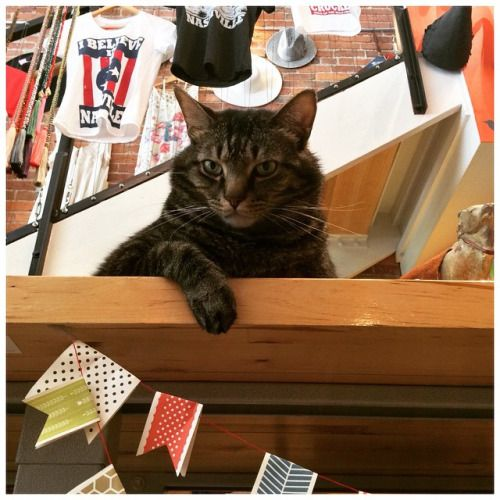 Look at this dictator... Geez.  #firefinch #Nashville #catsofig #catsofinstagram #cats_of_instagram #restingbitchface #nashvillepaw @nashvillepaw  (at Fire Finch)