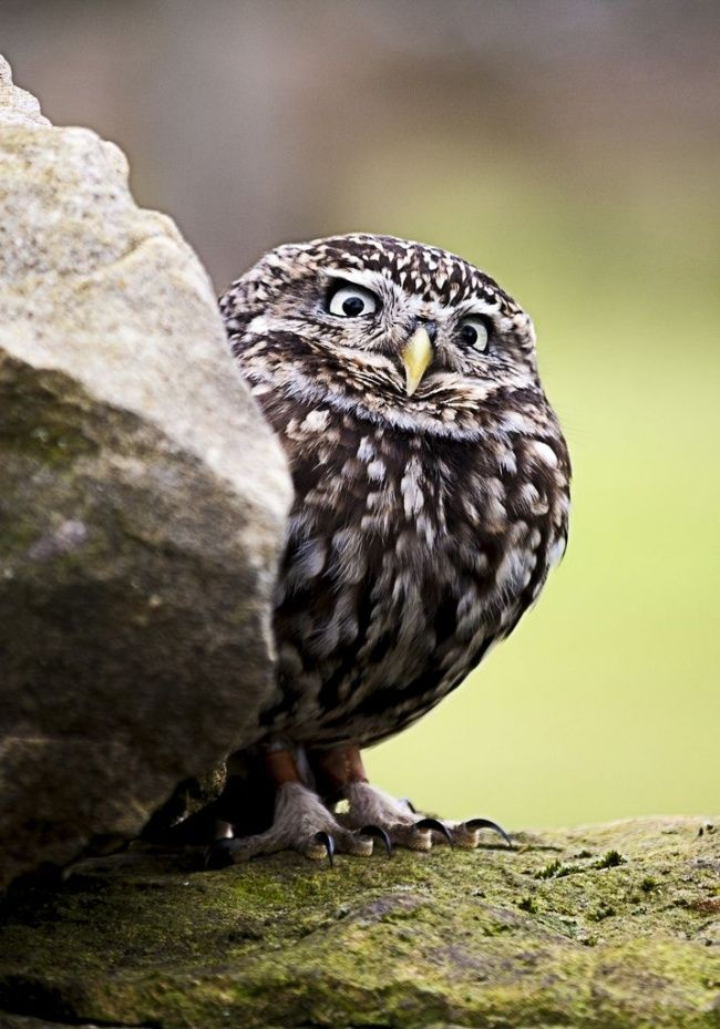 20 photos that owls can be proud of - @credesri