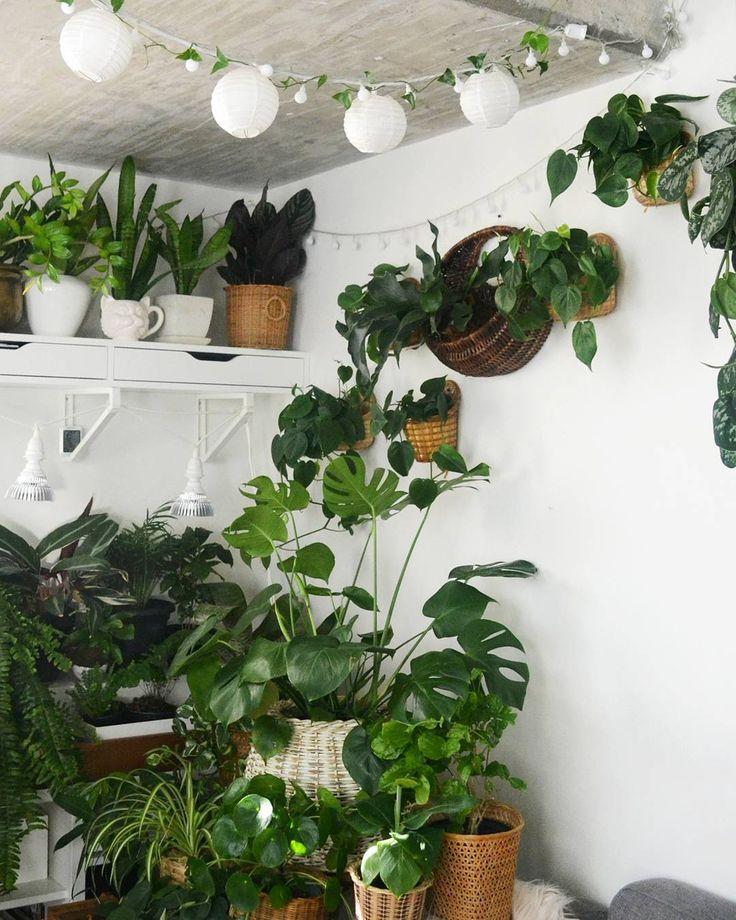 Best 25 indoor string lights ideas on pinterest string for Ways to hang plants inside