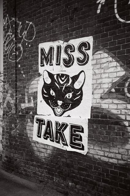 Best 25+ Missing cat poster ideas on Pinterest Kitten quotes - make missing poster