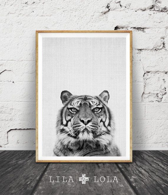 Tiger Wall Art Print, Black White and Grey Nursery Decor, Modern Minimalist Printable Instant Download, Peekaboo Animals, Safari Photography by Lila and Lola.