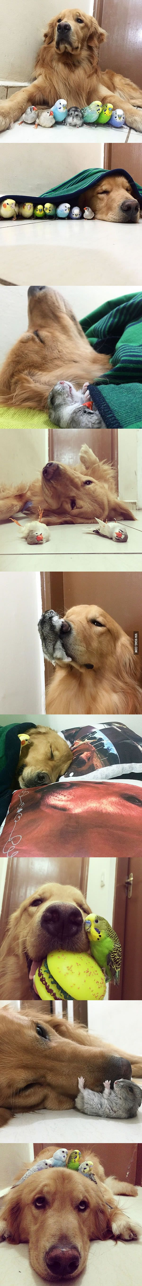 A Dog, 8 Birds And A Cute Hamster Make The Best Friends Ever