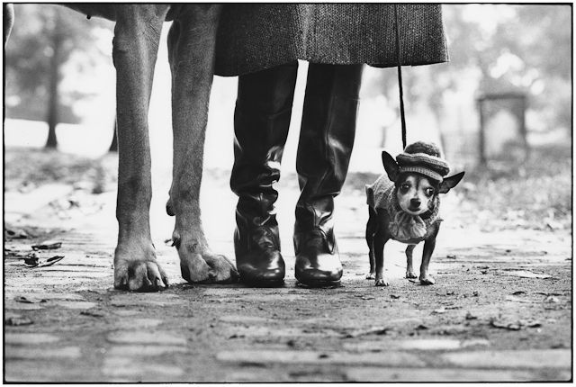 Okay… I'm calling it! This is officially the best photograph ever! | By Eliott Erwitt, New York, 1974, Felix Gladys and Rover