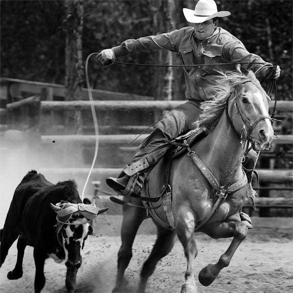 125 Best Images About Team Roping On Pinterest Kitchen