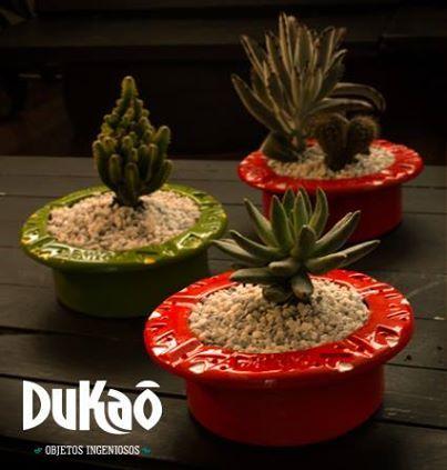 Bandejas para cactus