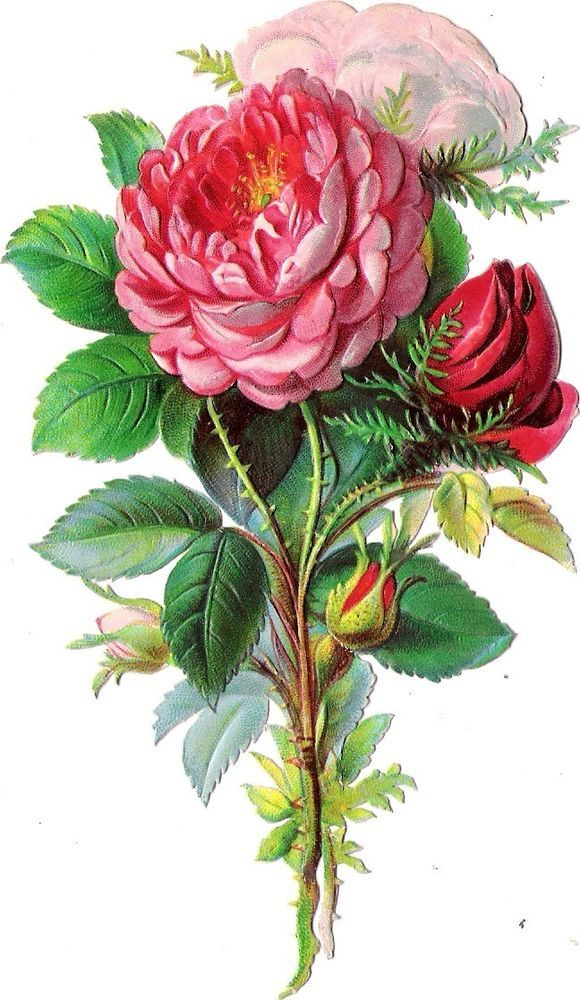 Oblaten Glanzbild scrap die cut chromo  Rose  14,5 cm  Blume flower