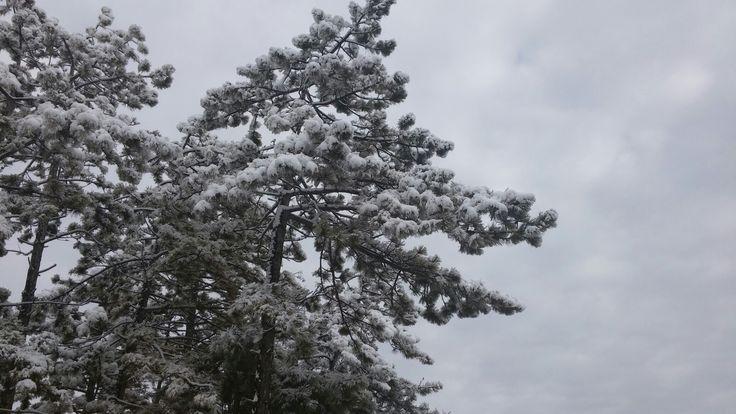 Keles bursakar kış gök kubbe