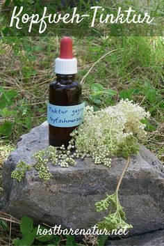 Eine einfache Wildkräuter-Tinktur gegen Kopfschmerzen - Zubereitung und Rezeptur