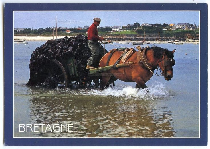 Bretagne - Charretée de goëmon - Attelage Cheval Algues - écrite