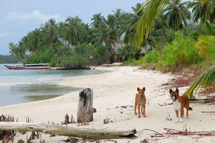 Jungle house .  fahitta  buritta . . . ____________________ #myart #photo #photography #life #travelling #ocean #photographer #instatravel #me #art #love #fujifilm #fujifilm_id  #destination #adventure #magic #magician #ogearthemus #me #nature #vacation #TravelLife #luxurylife #luxury #history #indonesia #igtravel #travelphotography #mentawai #animal