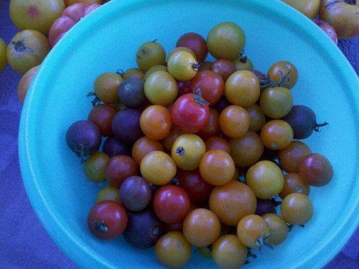 tomato basil jam in the Ball Freshtech jam Maker.
