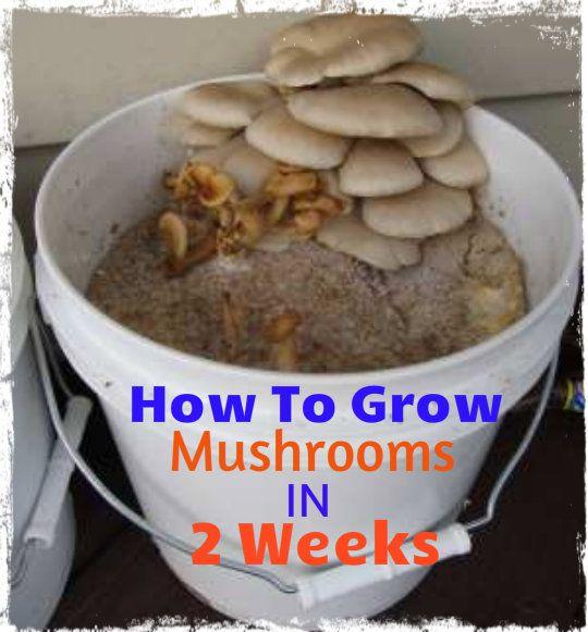 How to Grow Mushrooms in 2 weeks