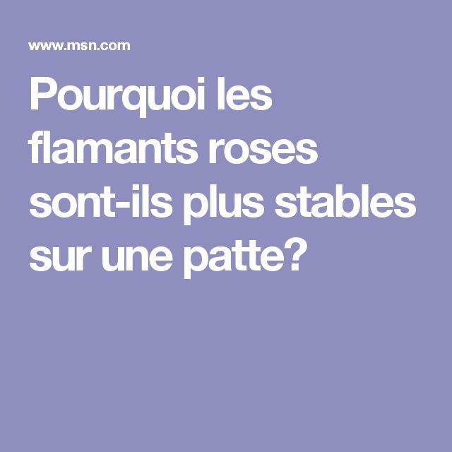 Pourquoi les flamants roses sont-ils plus stables sur une patte?