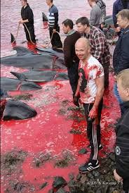 #FaroeIslands resident dripping blood of a sentient whale They claim ethically killed