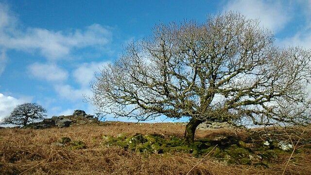 Dartmoore national park, England