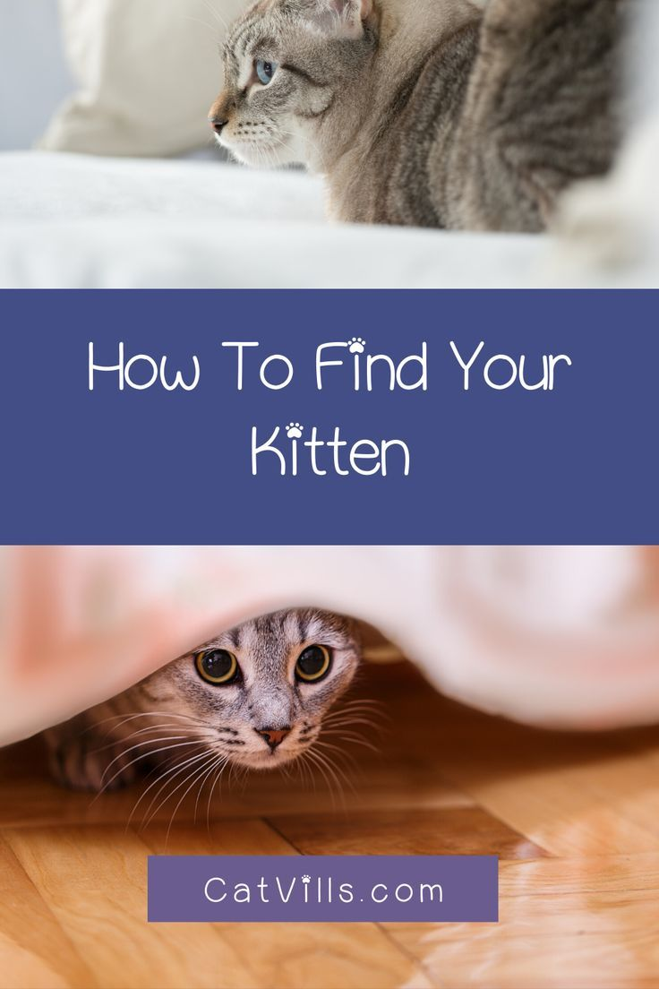 Kittens Are Crazy Good At Hiding Before You Go Nuts Check Out These Common Places To Look For Disappearin In 2020 Cat Behavior Cute Cats And Kittens Cats And Kittens