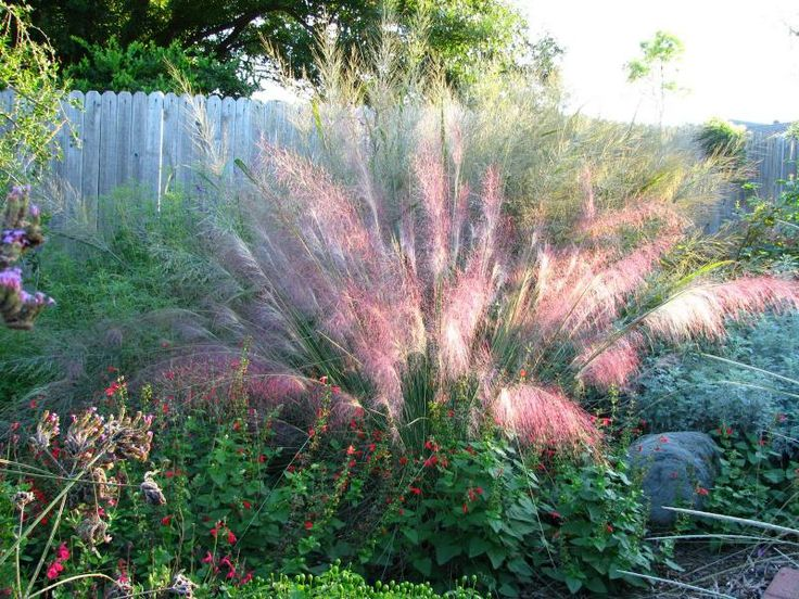 17 Best Images About Drought Tolerant Tx Plants On