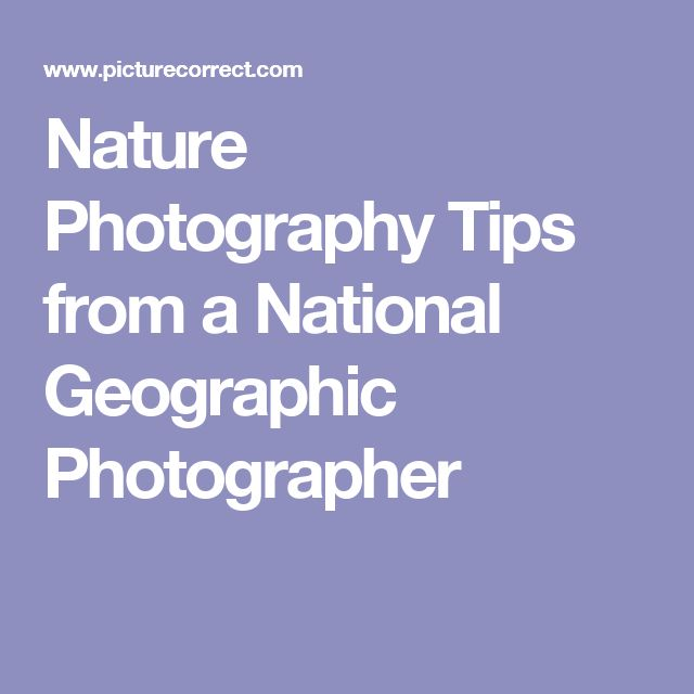 Nature Photography Tips from a National Geographic Photographer
