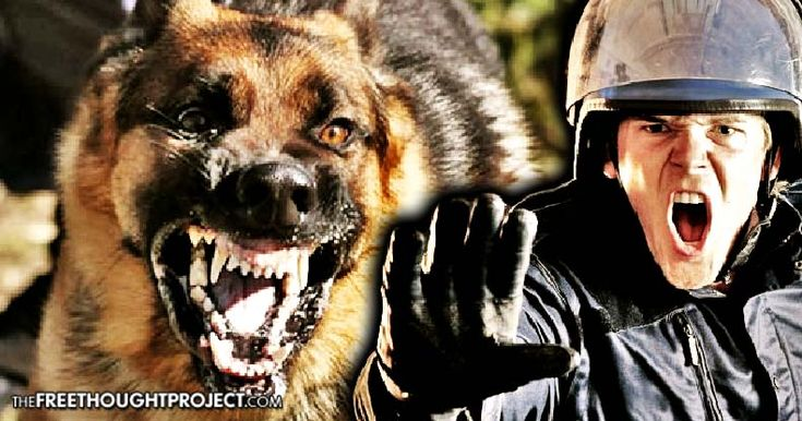 The U.S. Court of Appeals for the 4th Circuit held that the Constitution does not require cops to stop a K9 from tearing an innocent person to shreds.