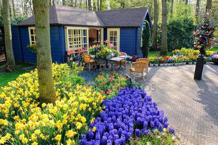 Baixar - Loja de flores em jardins keukenhof, lisse, Países Baixos — Imagem de Stock #12741640