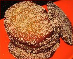 Anarsa | Anarse - Anarase recipe | diwali faral - http://www.mytaste.in/r/anarsa--anarse---anarase-recipe--diwali-faral-5854887.html