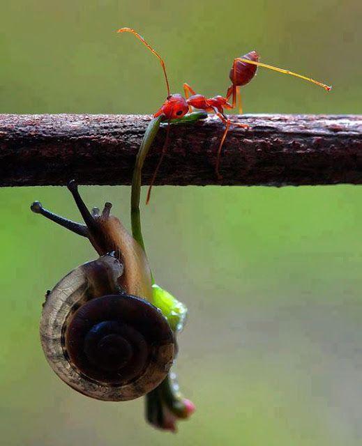 Grab my Hand big brother .! | Most Beautiful Pages    Se puede ver de 2 formas:  1) - ¡Amigo, ayúdame!  - ¡Agárrate fuerte!    2) - ¡No! ¡No me dejes caer!  - ¡Vas a morir, desgraciado!