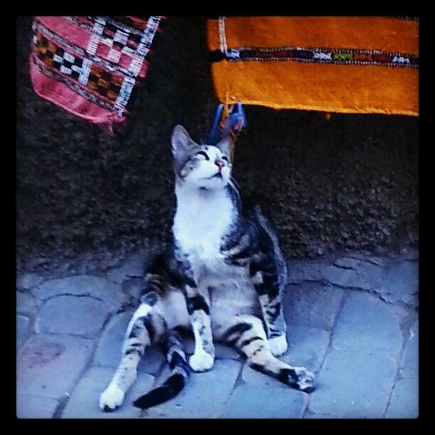 Miaouuuuuu de Marrakech