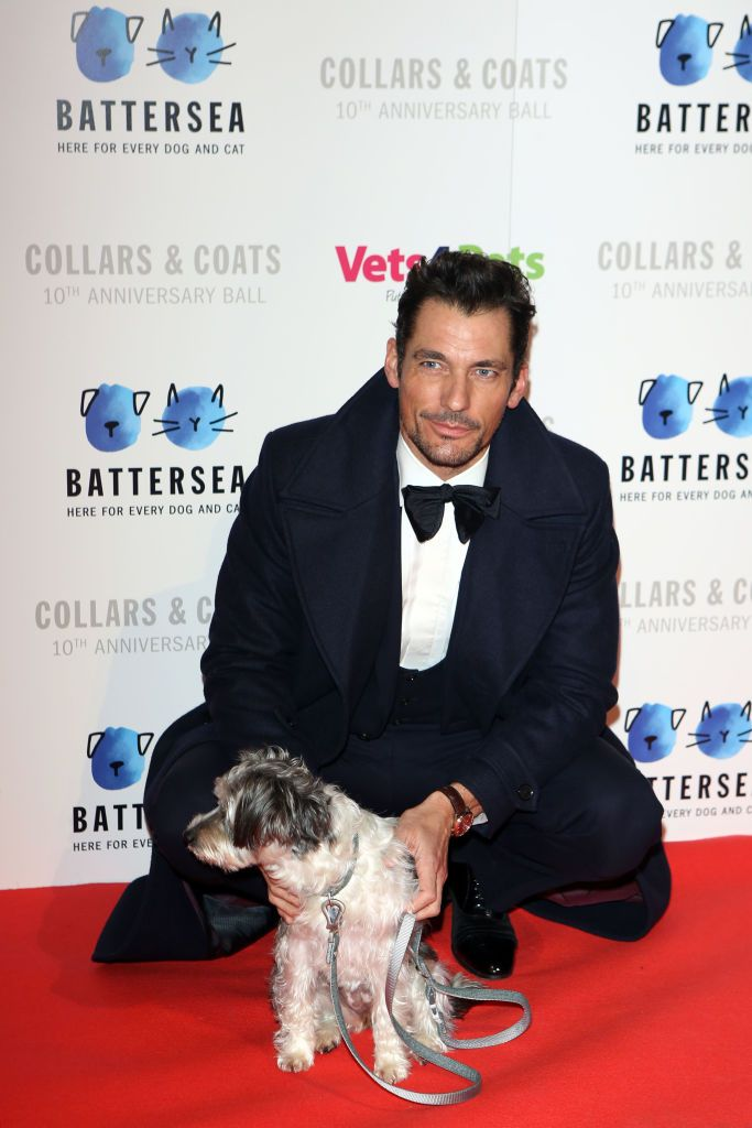 David Gandy Poses With A Dog At The Battersea Dogs Cats Home David Gandy Battersea Dogs Dog Cat