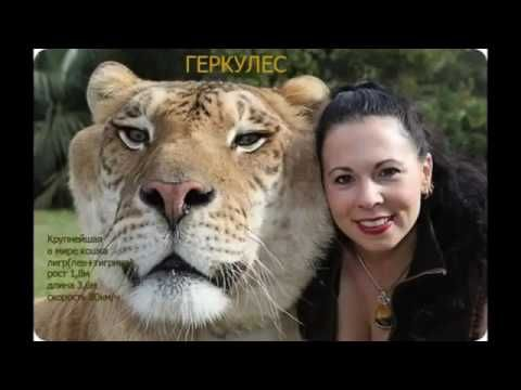 Scary horror stories about animals.Самые страшные животные в мире.
