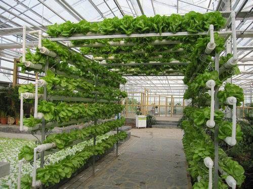 aquaponics hydroponics gardening design