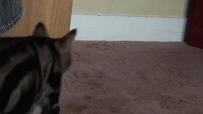 """gifsboom: """"Mom finds lost kitten. [video] [CatMan] """""""