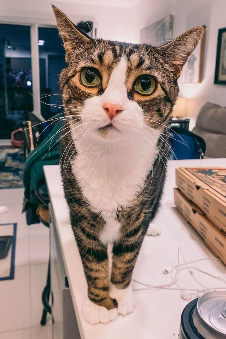 Cat Mom Life Animals And Pet Supplies Cat Supplies Favorites For Feline Pet Health Happiness Whether You Re L In 2020 Cat Pet Supplies Cat Mom Cats