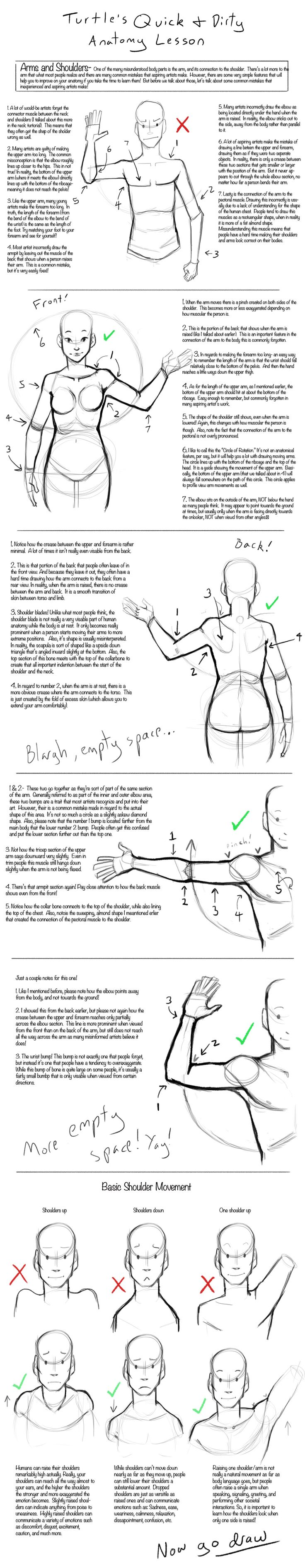 Q+D Anatomy Lessons- Arms and Shoulders by *TurtleShelltered