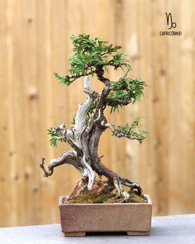 Descubra qual planta combina com as personalidades dos 12 signos e invista nos jardins dentro e fora de casa