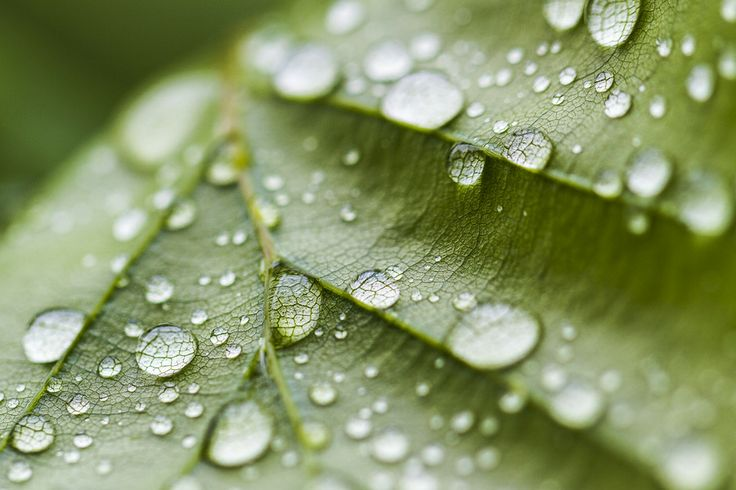 Green leave and rain drops by Karen-Louise Clemmesen on 500px