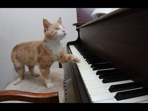 "Best Funny Cats Compilation 2016 - "" Cats Playing Piano "" -  #animals #animal #pet #cat #cats #cute #pets #animales #tagsforlikes #catlover #funnycats Best Funny Cats Compilation 2016 – "" Cats Playing Piano "" ✔ Playlist : Cute Babies Laughing [ Babylove TV ]: Cute Baby Videos Funny [ Babylove TV ]: Cats Love Babies Compilation [ B... - #Cats"